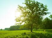 Sunrise behind tree — Stock Photo