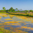 Stock Photo: Canal in Danube Delta