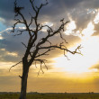 Стоковое фото: Two stork standing on dry tree in light morning sun