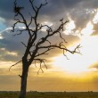 Stockfoto: Two stork standing on dry tree in light morning sun