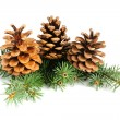 Fir branches with cones isolated on white background - Stock Photo