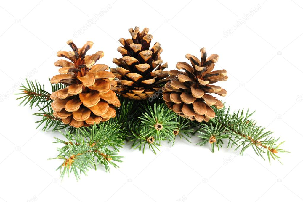 Fir branches with cones isolated on white background — Stock Photo #13745936