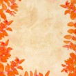 Orange autumnal leaves grungy background — Stock Photo