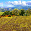 Beautiful landscape with fields in Springtime — Stock Photo #12304491