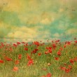 Red poppies fields with grungy effect — Stock Photo