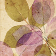 Beautiful, subtle vintage background with beautiful leaves — Stok Fotoğraf #12335006