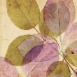 Beautiful, subtle vintage background with beautiful leaves — Photo #12335006