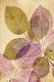 Beautiful, subtle vintage background with beautiful leaves — Stock Photo