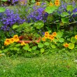 Summer in the garden - Stockfoto