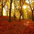 Beautiful Autumn in the park -  