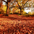 Beautiful Autumn in the park - Stockfoto