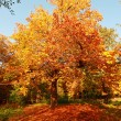 Beautiful Autumn in the park — Stock Photo