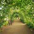 Green alley in the garden — Stock Photo