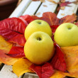 Ripe, green apples in the garden, Autumn time — Lizenzfreies Foto