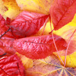 Beautiful, bright autumnal background — Stock Photo