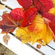 Beautiful, bright autumnal leaves on white bench in the garden — ストック写真