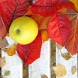 Ripe, green apples in the garden, Autumn time — Stock fotografie