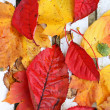 Beautiful, bright autumnal leaves on white bench background — Стоковая фотография