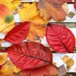 Beautiful, bright autumnal leaves on white bench background — Stock Photo
