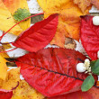 Beautiful, bright autumnal leaves on white bench in the garden — Stock Photo