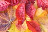 Beautiful, bright autumnal background — Stock Photo