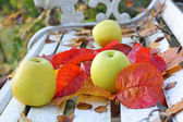 Ripe, green apples in the garden, Autumn time — 图库照片