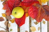 Ripe, green apples in the garden, Autumn time — Foto Stock