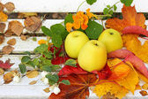 Ripe, green apples in the garden, Autumn time — Stok fotoğraf