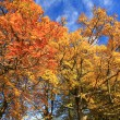 Beautiful Autumn in the Park, Scotland — Stock Photo #14054129
