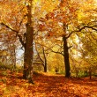 Beautiful Autumn in the Park, Scotland — Stock Photo #14054224