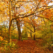 Beautiful Autumn in the Park, Scotland — Stock Photo #14054241