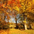 Beautiful Autumn in the Park, Scotland — Stock fotografie