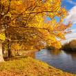 Beautiful Autumn in the Park, Scotland — Stock Photo