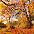 Beautiful Autumn in the Park, Scotland — Stock Photo #14054378