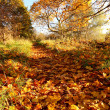 Beautiful Autumn in the Park, Scotland — Stock Photo #14054422