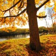 Beautiful Autumn in the Park, Scotland — Stock Photo #14054423