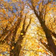 Beautiful Autumnal trees against blue sky — Stok fotoğraf