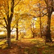 Beautiful Autumn in the Park, Scotland — Stock Photo #14054562