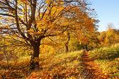 прогулка в осенний парк — Стоковое фото