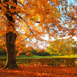 Beautiful, sunny autumn in the park — ストック写真