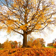 Beautiful, autumnal maple tree on the hill — Stock Photo
