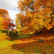 Beautiful, sunny autumn in the park — Stock fotografie