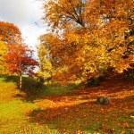Beautiful, sunny autumn in the park — Stock Photo #14312299