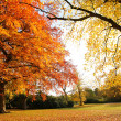 Beautiful, sunny autumn in the park — Stock Photo #14312427