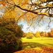 Beautiful, sunny autumn in the park — Stock Photo #14312463