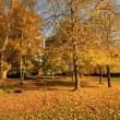 Beautiful, sunny autumn in the park — Lizenzfreies Foto