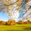 Beautiful, sunny autumn in the park — Stock Photo #14312543