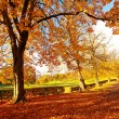 Beautiful, sunny autumn in the park — Stock Photo