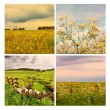 Beautiful summer in the fields, collage - Stock Photo