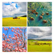 Collage of beautiful springtime scenes — Stock Photo